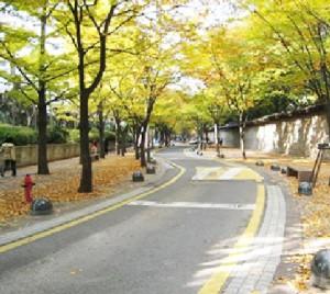 在首爾市感受五彩落葉所渲染的秋之路