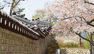 首爾的春季